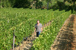 Man walking through vineyard