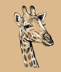 Sketch of a Giraffe's face