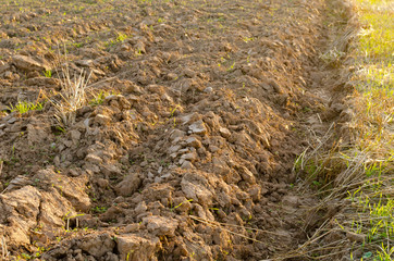 plowed field after harvest lit evening sunlight