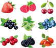 berries photo-realistic vector set