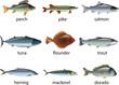 fish photo-realistic vector set