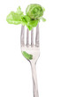 Salad on fork isolated on white background