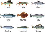 fish photo-realistic vector set
