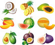 exotic fruits photo-realistic vector set