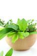 Fresh herbs in bowl