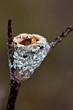 bébé oiseau colibri dans son nid