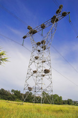Storks in an electrical post