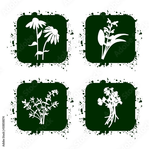 Herbs icons set, vector illustration