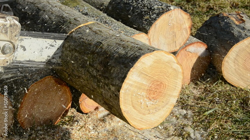 chainsaw blade cutting log of wood in farm