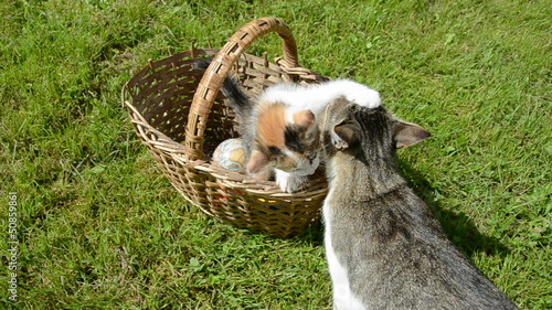 small kitten in old basket and adult cat mother on garden grass