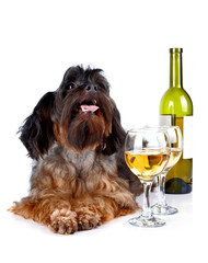 Decorative dog with a bottle of wine and glasses