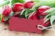 Tulpen und Schild