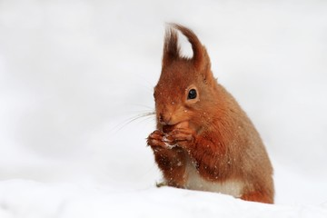 Frozen Nuts