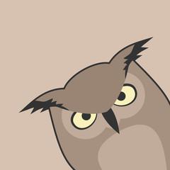 Corner owl