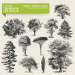 vector elements: tree sketches