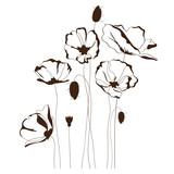 Fototapety Poppy design, floral background