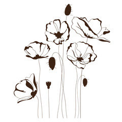 Poppy design, floral background