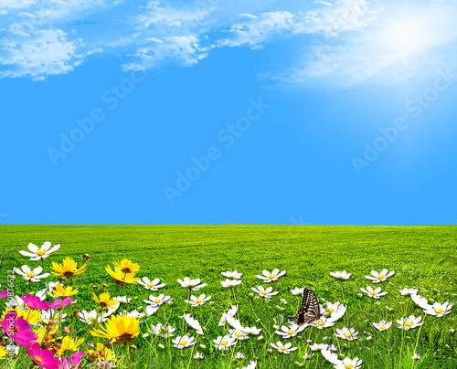 Fototapeten,wiese,natur,himmel,gras