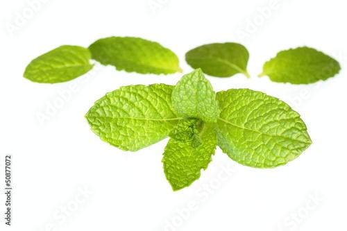 キッチンハーブのミント葉