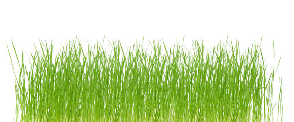 fresh green spring grass