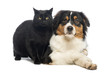 Australian Shepherd lying next to a Black Cat