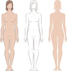 Vector illustration of woman's figure