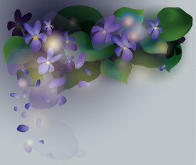 Violets / Beautiful  spring background with flowers