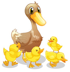 The brown duck and her four yellow ducklings