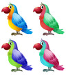 Four colorful parrots