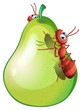 A pear fruit with two ants