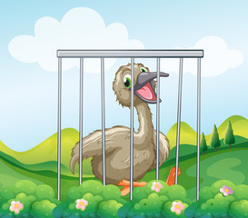 An ostrich inside the cage