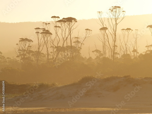 Foto op Canvas Bos in mist Tasmanian temperate rain forest