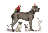 Group of pets,Group of pets - Dog, cat, bird, reptile, rabbit,..