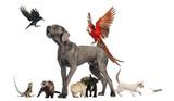 Group of pets,Group of pets - Dog, cat, bird, reptile, rabbit,..