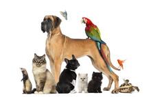 Grupa zwierząt - psów, kotów, ptaków, gadów, królik, ...