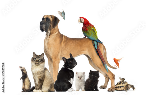 Fototapeta Group of pets - Dog, cat, bird, reptile, rabbit,...