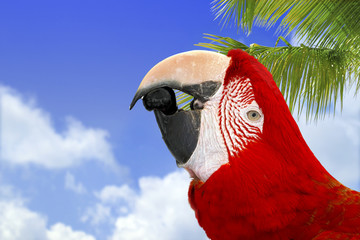 Beautiful Red Macaw on the Sky Background