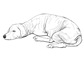 The pooring old mangy dog look sad and lonely
