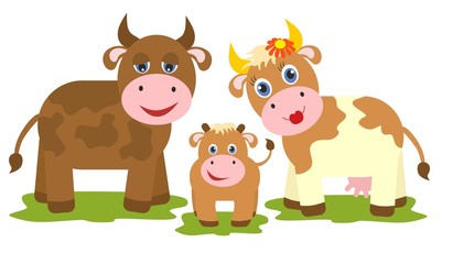 Cow, bull and small calf