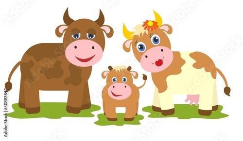 Foto op Canvas Boerderij Cow, bull and small calf