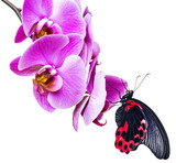 tropical butterfly sitting on an orchid