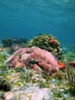Colorful corals with sea star