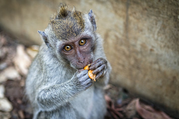 Monkey and food