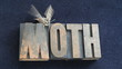 sphinx moth on old wood type word