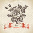 Rose. Hand drawn vintage design.
