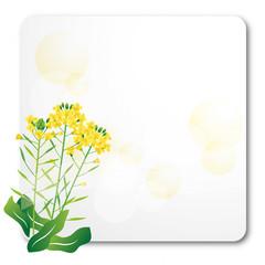 菜の花 背景
