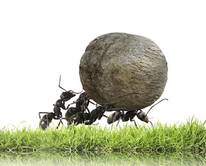 team of ants rolls stone uphill