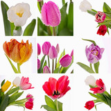 Collage of spring flowers
