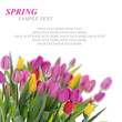 Spring card with tulips