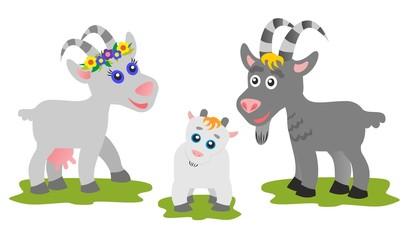 Goats family